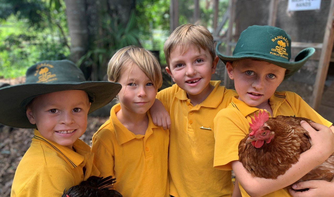 Bangalow Public School students care and look after our chickens.